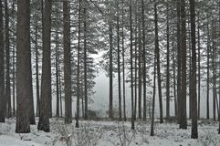Snowy forest in winter Royalty Free Stock Images