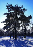 Snowy forest in winter Royalty Free Stock Photos