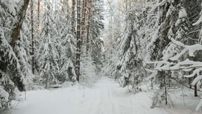 Snowy forest in the winter stock video footage