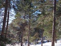 Snowy forest Stock Photos