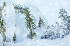 Snowy Forest Stock Images