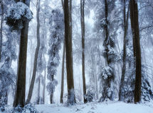 Snowy forest in the Winter Stock Photos
