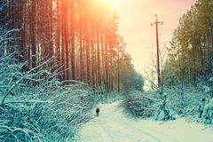 Snowy forest in winter at sunset Royalty Free Stock Image