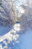 Snowy forest in the winter time Stock Image