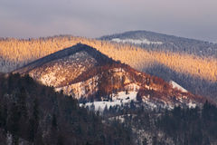 Snowy forested mountains Stock Image