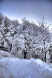 Snowy forested mountainside. Scenic view of white snow covered trees on forested mountainside with sky background royalty free stock photography
