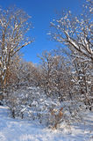 Snowy freezing forest winter landscape Stock Photos
