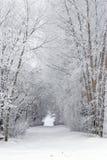 Snowy-Frost deckte Baum gefüllten Weg im Land ab Stockfotos