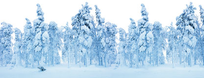 Snowy Frozen Forest - Winter border background royalty free stock photos