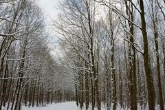 Snowy and frozen forrest in the Netherlands Royalty Free Stock Image