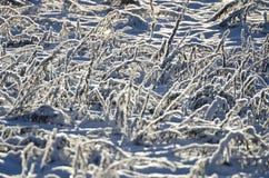 Snowy  frozen meadow grass sunlight background Royalty Free Stock Image