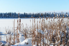 Snowy Frozen plants, winter forest background Stock Photos