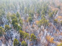 Snowy and frozen winter forest. Aerial view on the mountain landscape in winter season Stock Photography