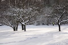 Snowy fruit trees Stock Photography