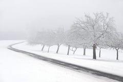 Snowy fruit trees with fog Stock Photos