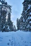 Snowy-Fußweg im Wald in den Bergen am kalten Wintertag lizenzfreies stockfoto