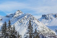 Furggahorn summit near Arosa with spruces and blue sky. Snowy Furggahorn summit near Arosa with spruces and blue sky stock photography