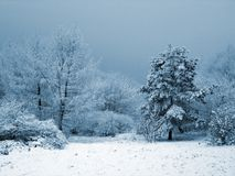 Snowy garden Royalty Free Stock Images