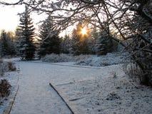 Snowy-Garten Stockfotos