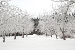 Snowy-Gasse lizenzfreie stockfotografie