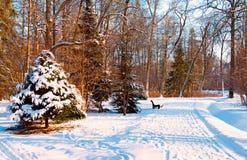 Snowy-Gasse im Park Lizenzfreies Stockbild