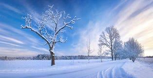 Snowy-Gasse im Winter lizenzfreie stockbilder