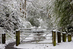 Snowy gate to woods Stock Photos