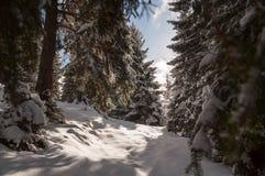Snowy-Gebirgspfad lizenzfreies stockbild
