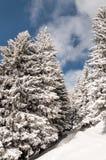 Snowy-Gebirgspfad stockfoto