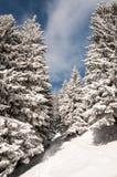 Snowy-Gebirgspfad lizenzfreie stockbilder
