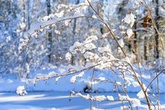 Snowy gefrorene Anlagen, Winterwaldhintergrund Lizenzfreie Stockfotos
