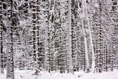 Snowy-gezierter Wald Stockfotos