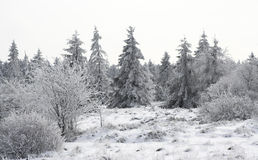 Snowy glade Royalty Free Stock Image