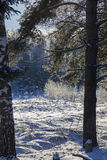 Snowy glade in the winter forest Stock Photography