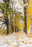 Snowy golden autumn avenue at winter royalty free stock images