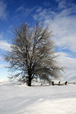 Snowy-Grasland-Szene Lizenzfreie Stockfotos
