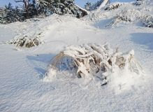 Snowy grass on a frosty day. The Baltic Sea coast in winter, Latvia Royalty Free Stock Photos