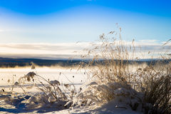 Snowy grass with a misty lake behind. Grass silhouetted against a blue sky a beautiful cold winter day by a lake Royalty Free Stock Photos
