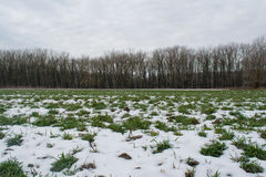 Snowy green field close to dark forest Stock Images