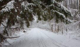 Snowy ground road crossing snowy forest Royalty Free Stock Images