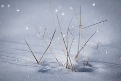 Snowy ground texture glittering in sunlight with dry grass starring out Stock Photo