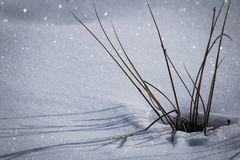 Snowy ground texture glittering in sunlight with dry grass starring out. The snow Royalty Free Stock Photography