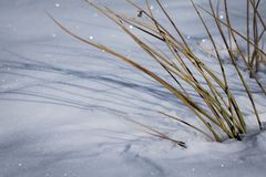 Snowy ground texture glittering in sunlight with dry grass starring out. The snow Royalty Free Stock Images