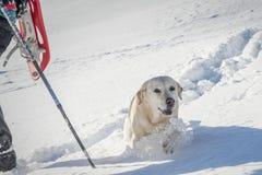 Snowy-Hügel Lizenzfreies Stockfoto