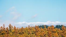 Snowy Hallasan mountain and maple tree in Jeju Island, Korea stock photo