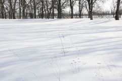 Snowy hare Lane Stock Image