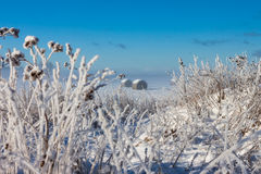 Snowy hay bales Stock Images