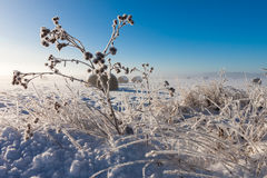 Snowy hay bales Stock Photo