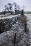 Snowy hedgerow Royalty Free Stock Photo
