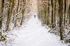 Snowy hike in golden light through a wooded trail Royalty Free Stock Photography